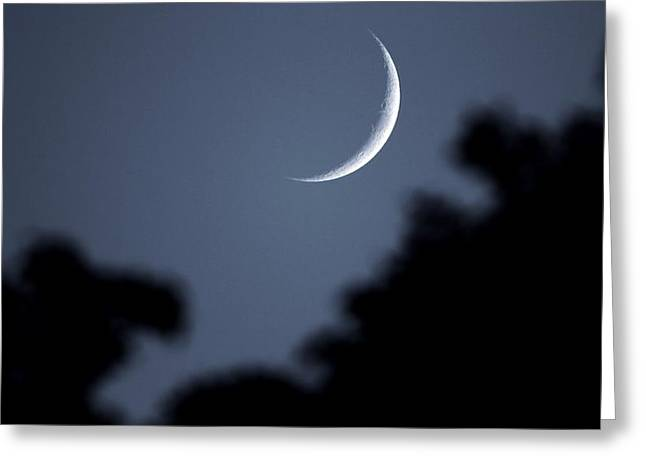 Waxing Crescent Greeting Cards - Waxing Crescent Moon In The Forest Greeting Card by Dan Sproul