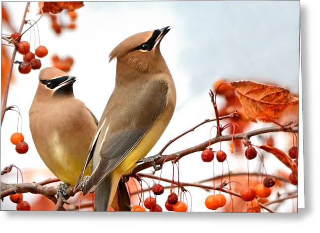 Fall Colors Greeting Cards - When Waxwing Visit Greeting Card by Nava  Thompson