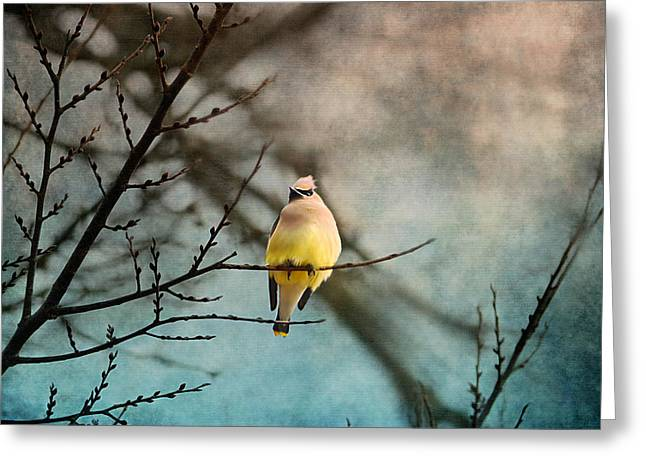 Cedar Waxwing Greeting Cards - Waxwing at Winter Sunset Greeting Card by Jai Johnson