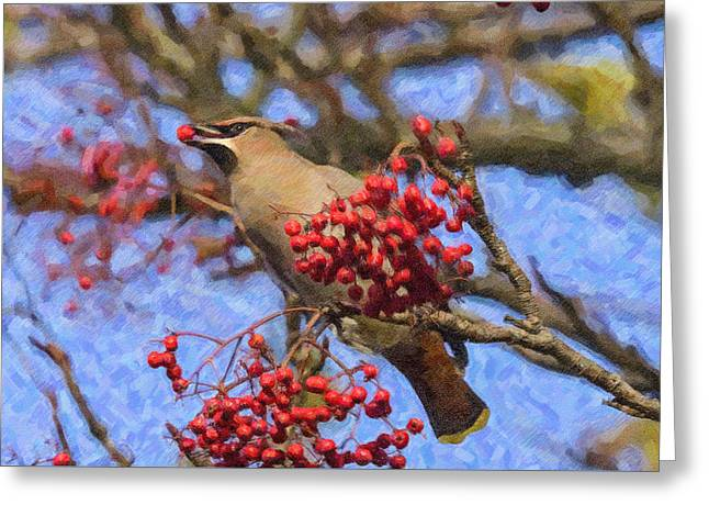 Wild Greeting Cards - Waxwing eating berry Greeting Card by Liz Leyden