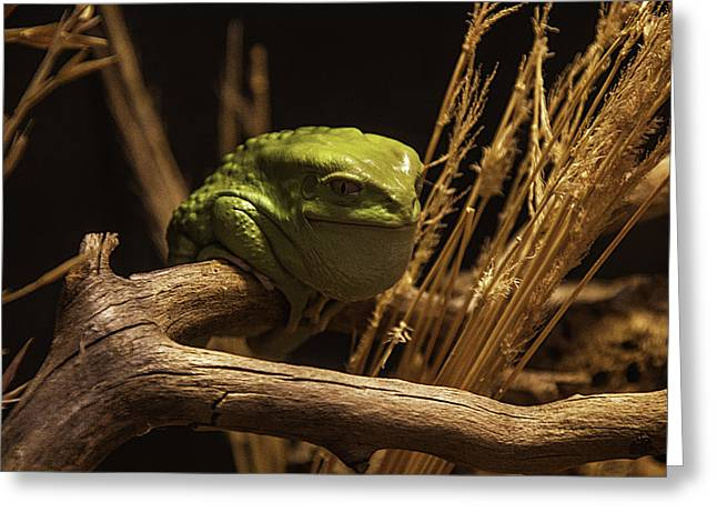 Tree Frog Greeting Cards - Waxy Monkey Tree Frog Greeting Card by Garry Gay