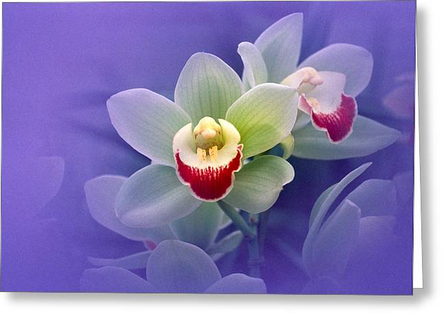 White Orchid Greeting Cards - Waxy White Orchids With Fuchsia Centers Greeting Card by Panoramic Images