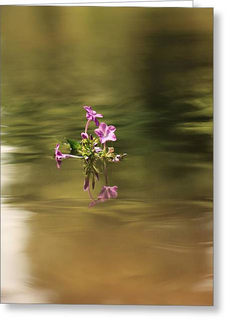 Floating Flowers Greeting Cards - Wayward Course Greeting Card by Lyndsey Warren