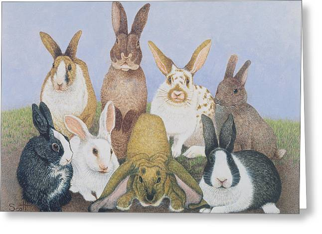 Rabbit Greeting Cards - We Are All Ears Oil On Board Greeting Card by Pat Scott