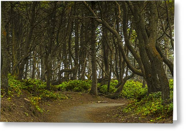 Black Canvas Greeting Cards - We Follow the Path II Greeting Card by Jon Glaser