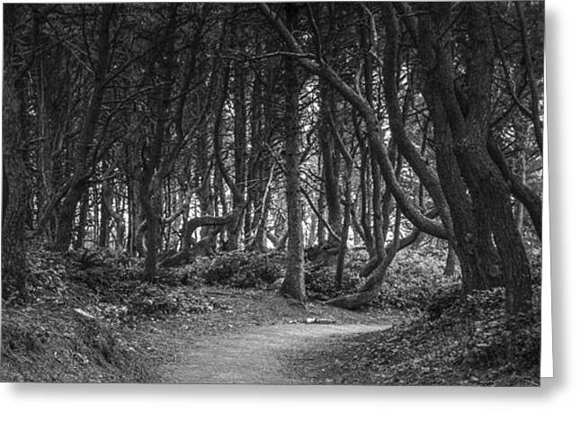 Black Canvas Greeting Cards - We follow the Path Greeting Card by Jon Glaser
