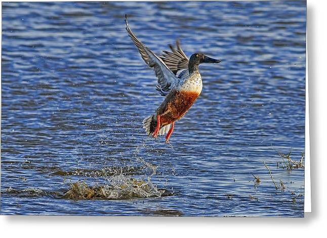 Texas Greeting Cards - We Have Liftoff Greeting Card by Gary Holmes