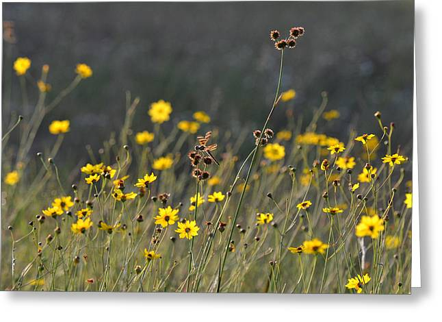 Yellow Dragonfly Greeting Cards - We Kissed The Lovely Grass Greeting Card by Melanie Moraga