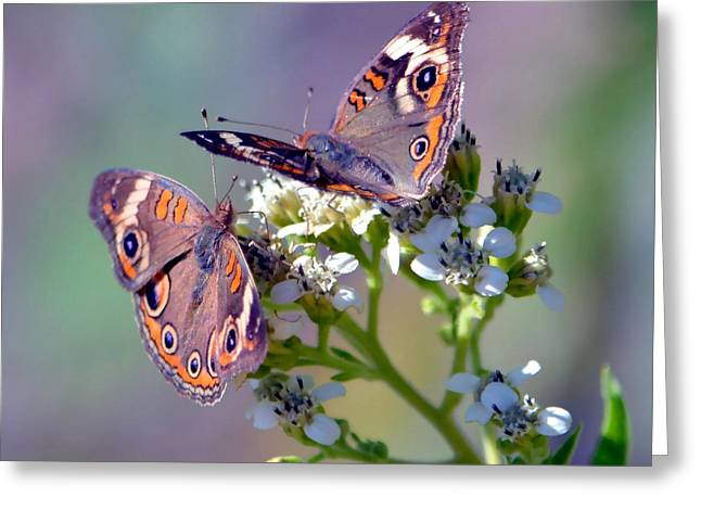Butterfly On Lavender Greeting Cards - We Make A Beautiful Pair Greeting Card by Deena Stoddard