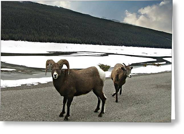 Mountain Valley Greeting Cards - We Roam Greeting Card by Shirley Sirois