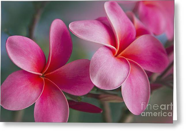 Beautiful Flowering Trees Greeting Cards - We were together . . .  Greeting Card by Sharon Mau