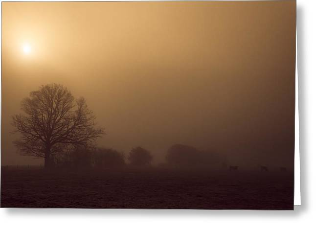 Weak Winter Sun Greeting Card by Chris Fletcher