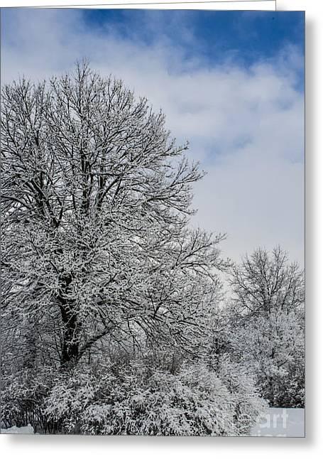 Winter Storm Nemo Greeting Cards - Wealth of Snow After Nemo Greeting Card by Deborah Smolinske