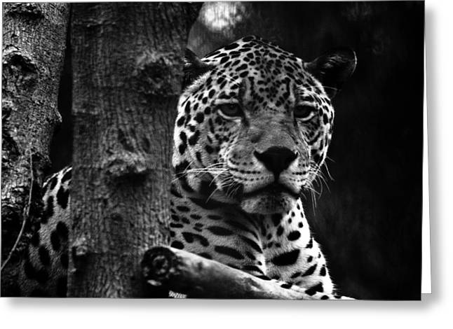Jaguars Greeting Cards - Wear Your Attitude Not My Skin Greeting Card by Mudit Mathur