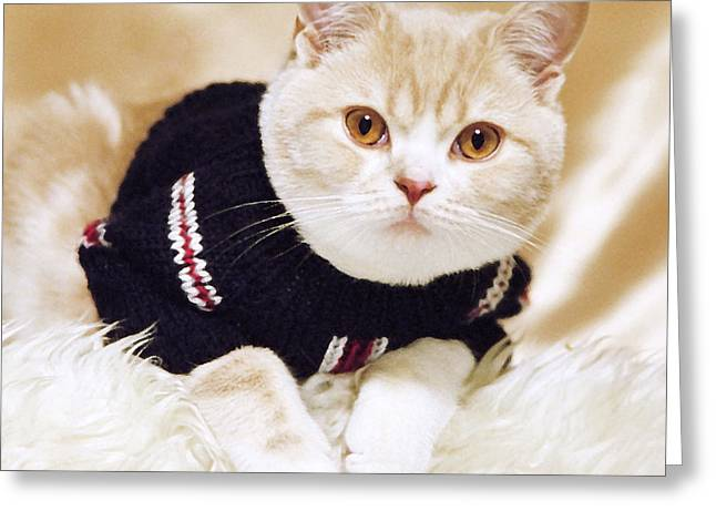 House Pet Digital Art Greeting Cards - Wearing a sweater Greeting Card by Aiolos Greek Collections