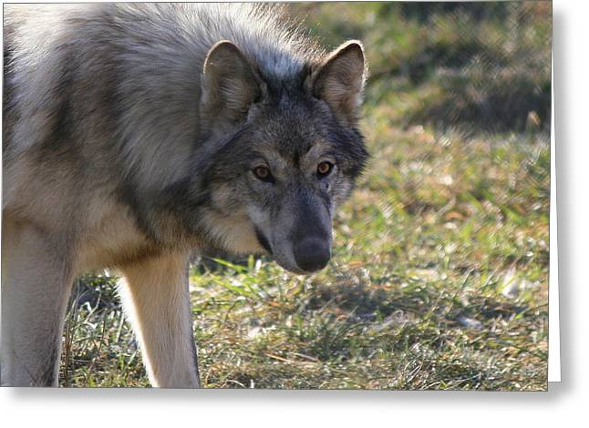 Neal Eslinger Photography Greeting Cards - Weary Stance Greeting Card by Neal  Eslinger