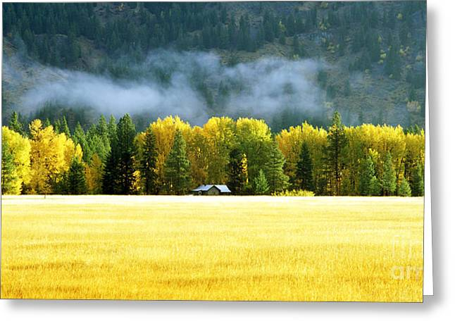 Whole Field Greeting Cards - Wheat field in Autumn Greeting Card by King Wu