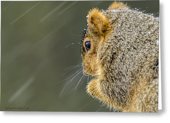 Wild Orchards Greeting Cards - Weather Squirrel Greeting Card by LeeAnn McLaneGoetz McLaneGoetzStudioLLCcom