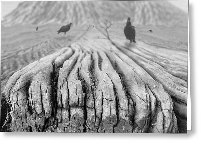 Buzzard Greeting Cards - Weathered 3 Greeting Card by Mike McGlothlen