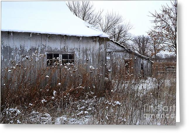 Sheds Greeting Cards - Weathered Barns in Winter Greeting Card by Amy Lucid