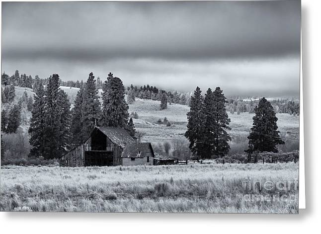 Country Shed Greeting Cards - Weathered Beneath the Storm Greeting Card by Mike  Dawson