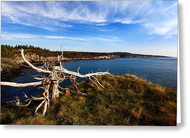 Ocean Art Photography Greeting Cards - Weathered Coast Greeting Card by Bill Caldwell -        ABeautifulSky Photography