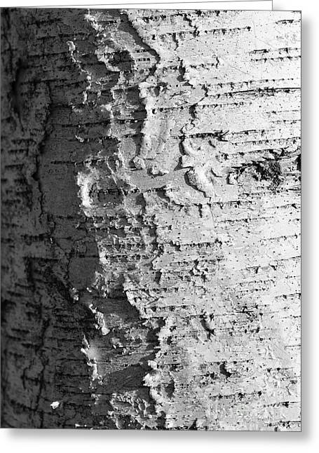 Birch Tree Greeting Cards - Weathered Greeting Card by Luke Moore