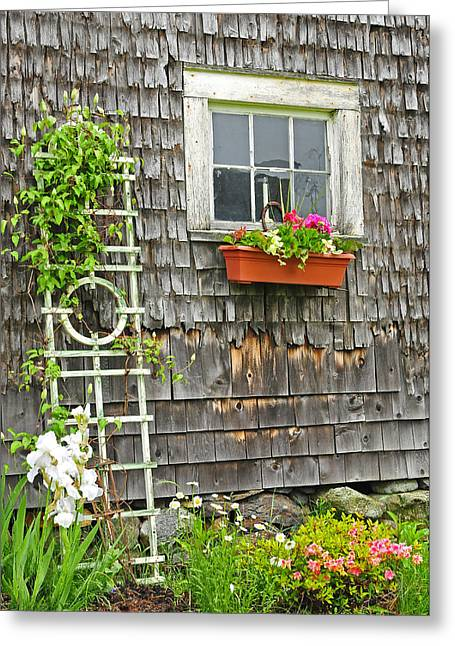Old Maine Barns Greeting Cards - Weathered Maine Seacoast Barn Greeting Card by Thomas Schoeller