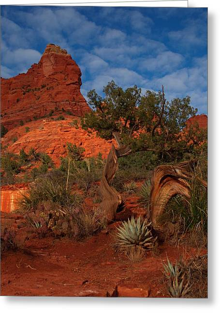 Peterson Nature Photography Greeting Cards - Weathered Greeting Card by James Peterson