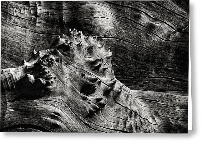 Gnarly Greeting Cards - Weathered Wood Greeting Card by Robert Woodward