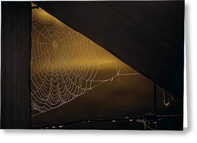 Spider Web Greeting Cards - Web Greeting Card by Chris Fletcher