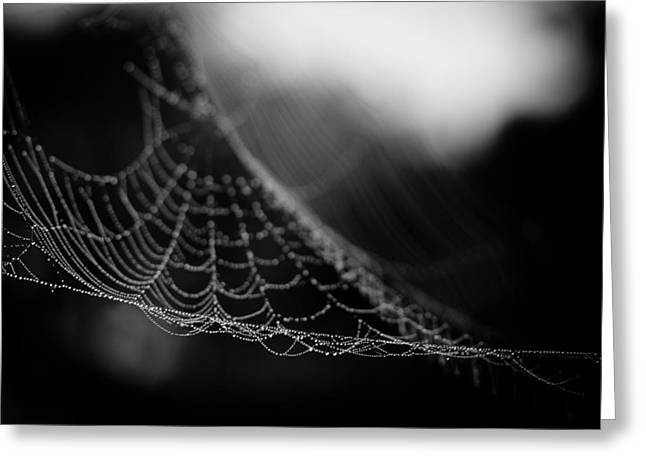 Spider Web Greeting Cards - Web Hammock Greeting Card by Shane Holsclaw