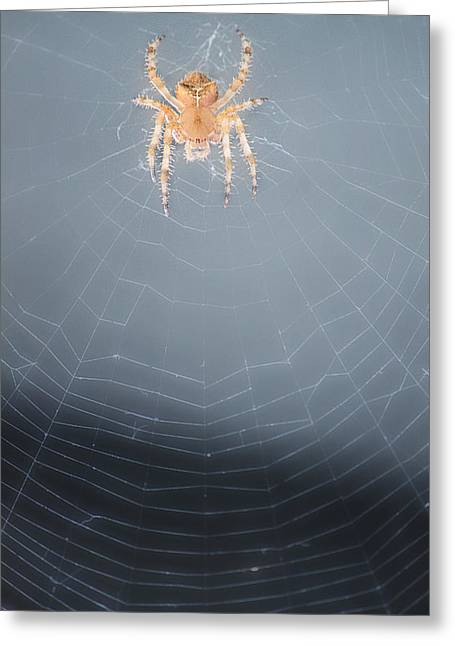 Spider And Fly Greeting Cards - Web Work Greeting Card by Melanie Lankford Photography