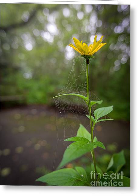 Nature Center Greeting Cards - Webbed Flower Greeting Card by Andrew Slater