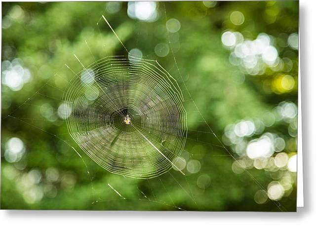 Dewdrops Digital Art Greeting Cards - WEBilicious  Greeting Card by Eti Reid