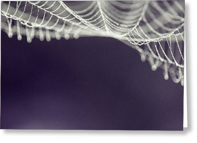 Spiderwebs Greeting Cards - Webs Greeting Card by Danielle Silveira