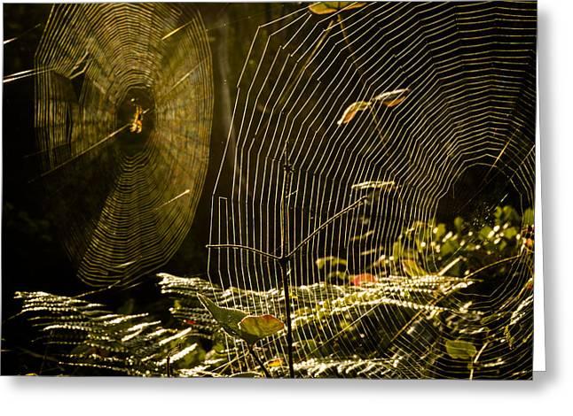 Spiderwebs Greeting Cards - Webs Greeting Card by Kyle Wasielewski