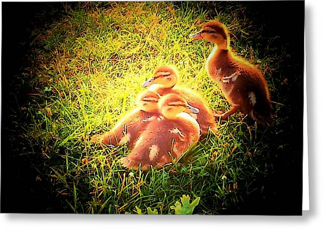 Ducks Lakes Greeting Cards - Webster Chicks Greeting Card by Michael L Kimble