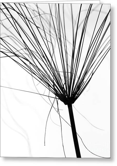 Weedy Greeting Cards - Weed by the Lake Greeting Card by Sabrina L Ryan