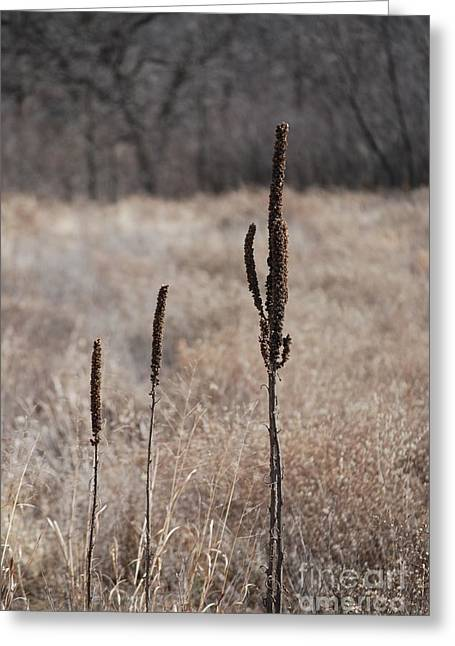 Weeds At He Wetlands Greeting Card by Mark McReynolds