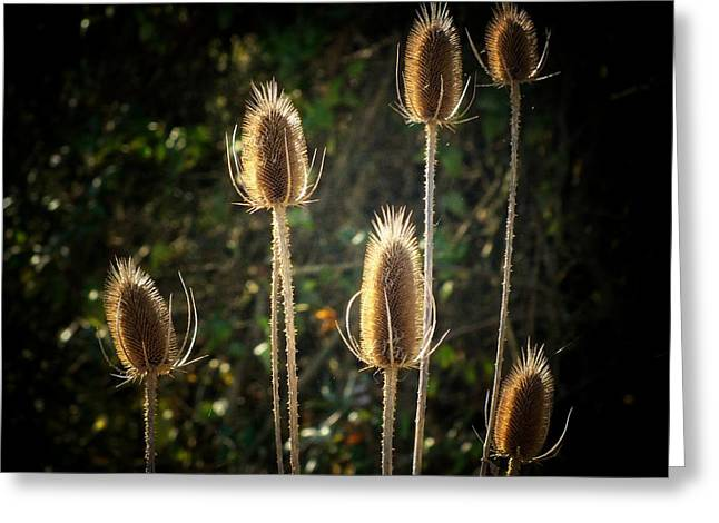 Weed Greeting Cards - Weeds Greeting Card by Michael L Kimble