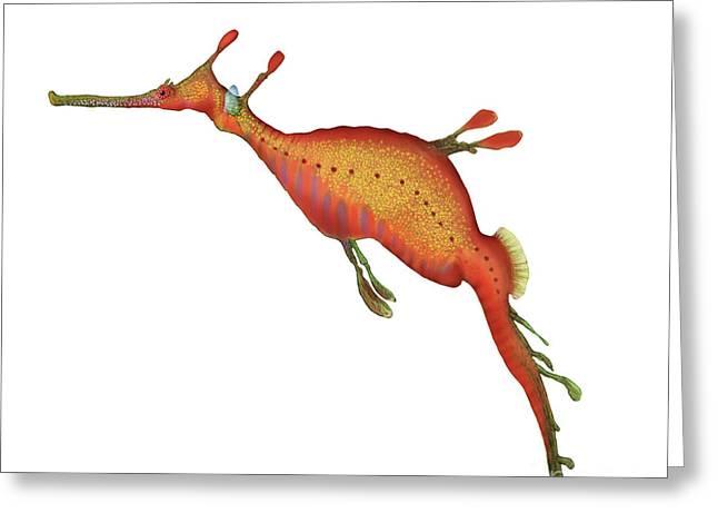 Seadragon Greeting Cards - Weedy Seadragon Phyllopteryx Taeniolatus Greeting Card by Carlyn Iverson
