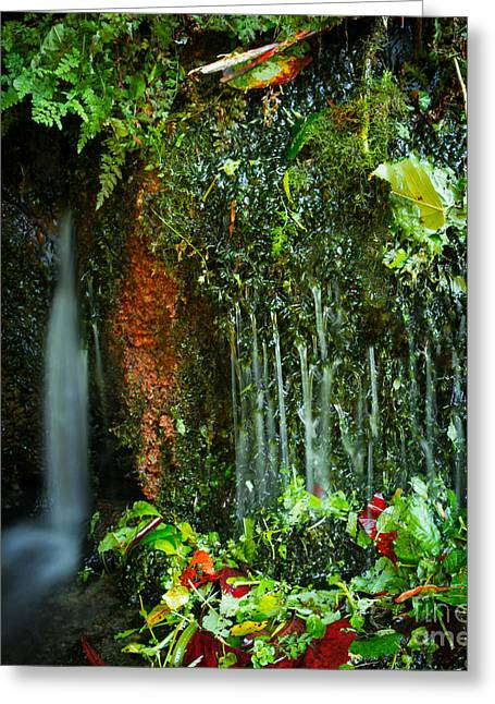 Kentucky Greeting Cards - Weeping Flow Greeting Card by Wayne Stacy
