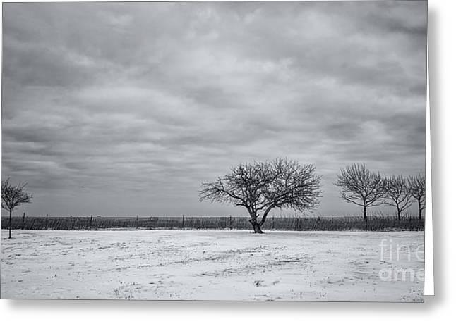 Weeping Souls Of Winter Desires Greeting Card by Evelina Kremsdorf
