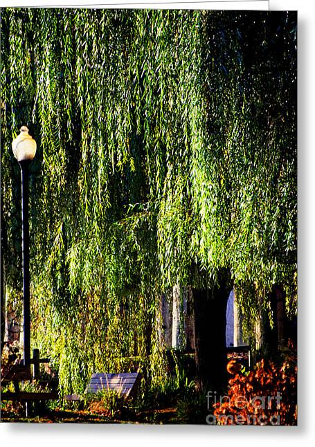 Willow Lake Mixed Media Greeting Cards - Weeping Willow  Greeting Card by AdSpie Studios