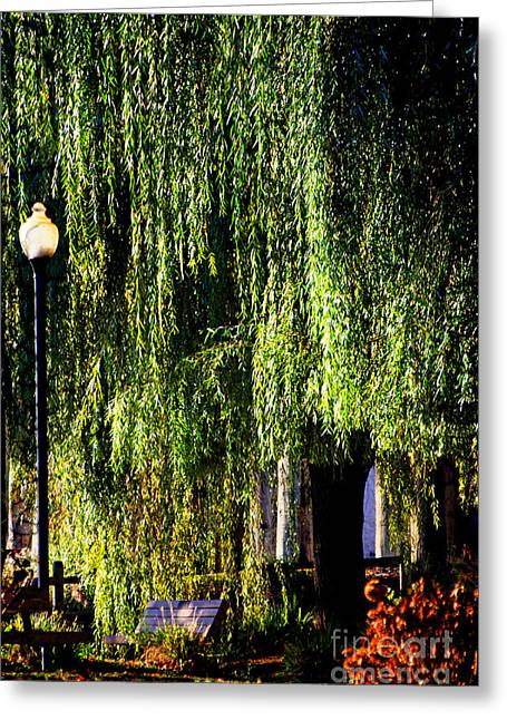 Weeping Mixed Media Greeting Cards - Central Park Weeping Willow  Greeting Card by ArtyZen Studios - ArtyZen Home