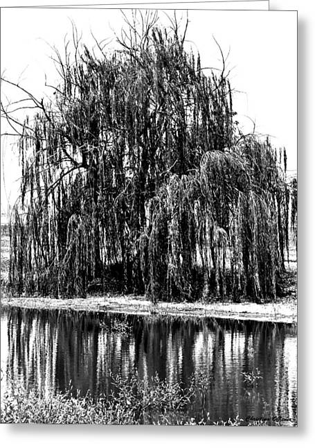 Weeping Greeting Cards - Weeping willow Greeting Card by Christina Ochsner