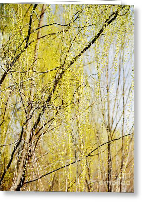 Weeping Greeting Cards - Weeping Willow Greeting Card by Irina Wardas