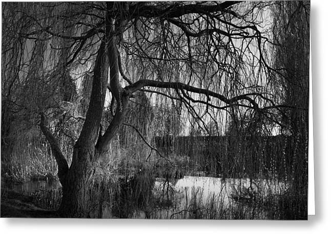 Weeping Photographs Greeting Cards - Weeping Willow Tree Greeting Card by Ian Barber