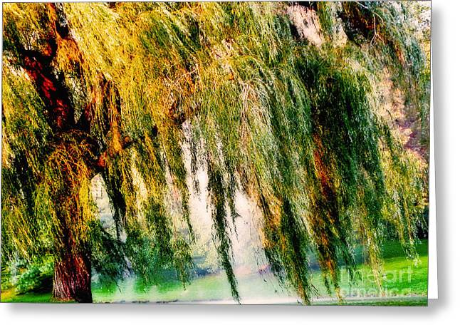 Outdoor Photography Digital Greeting Cards - Weeping Willow Tree Painterly Monet Impressionist Dreams Greeting Card by Carol F Austin